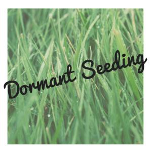 dormant-seeding-1