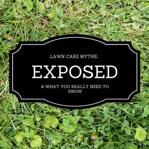 lawn-care-myths